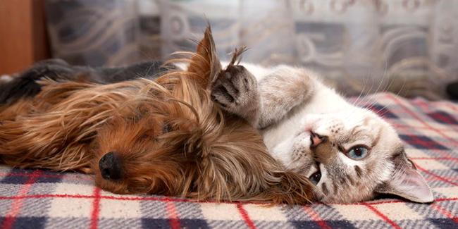 Quel est le coût moyen d'une assurance santé chien/chat ?