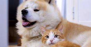 Assurance chien/chat sans avance de frais : explications