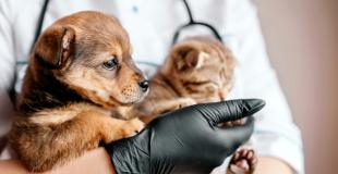 Une mutuelle chien/chat sans délais de remboursement : est-ce que ça existe ?