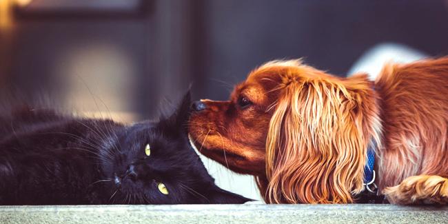 Quelles caractéristiques de l'assurance chien/chat ?