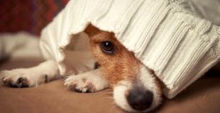 Pourquoi choisir une assurance chien/chat sans délais de carence ?
