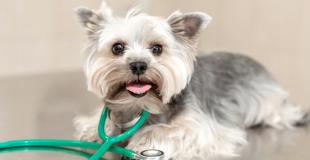 Quelle assurance pour un animal atteint de maladie aiguë ou chronique ?