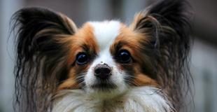 Quelles conditions pour souscrire une assurance chien/chat ?