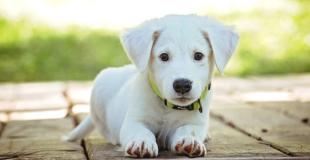 Quelles sont les garanties proposées par une mutuelle chien/chat ?