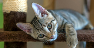 Comment fonctionne l'indemnisation d'une assurance chien/chat ?